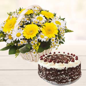 Gerbera With Black Forest Cake: Gifts For Wife Idgah Hills,  Bhopal
