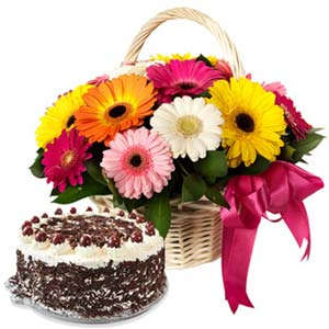 Mix Gerbera With Black Forest Cake: Gift For Friends Nishatpur,  Bhopal